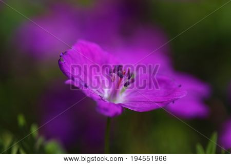 Delicate purple flower on a green background