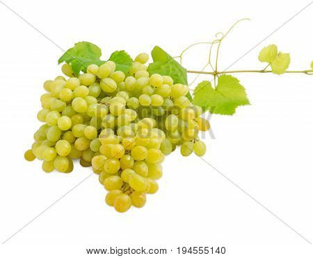 Cluster of the ripe table white grapes on the vine with leaves and tendrils on a light background