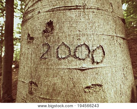 Number Two Thousand. Knife Carving On Beech Tree Bark. Tree Vandalism In A Forest