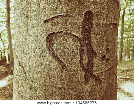 Chinese Or Japanese Letter. Knife Carving On Tree Bark. Tree Vandalism In Forest