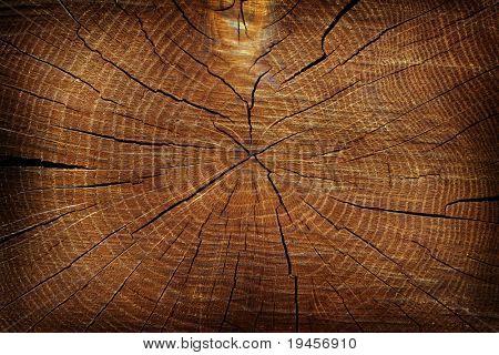 Dried tree cut texture