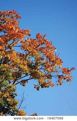 Autumn and the tree