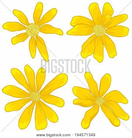 Pattern yellow wildflowers. Pattern spring yellow wildflowers. Graphic texture with buttercups. Sketch pattern for print on clothing.