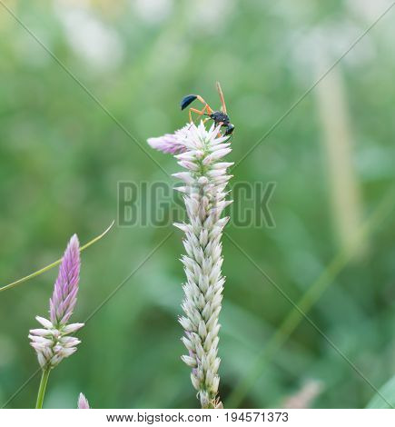 Close up of insect collecting nectar on a flower blurred green background.