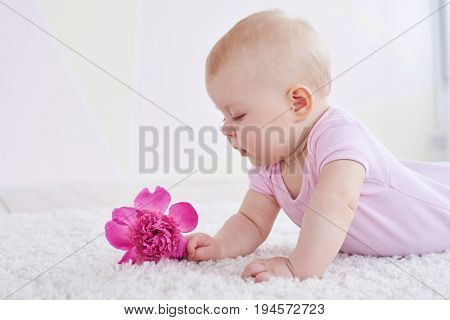 A side shot of cute little baby wearing pink suit lying on the carpet and looking attentively at a rosy flower. Lovely kid playing indoors