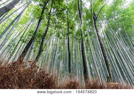 Wide angle of the Arashiyama Bamboo Grove with blurred tourists in Kyoto