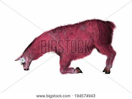 3D rendering of a pink lama isolated on white background