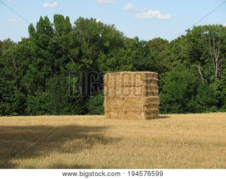 Large bale of straw in the field