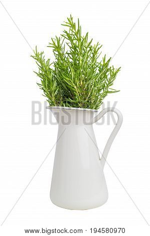 Fresh thyme herb grow in vase. Fresh organic flavoring thyme plants growing. Nature healthy flavoring thyme cooking. Ingredients for food isolated on white background