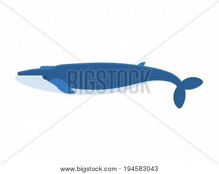 Vector illustration of humpback blue whale isolated on white background. Flat design.