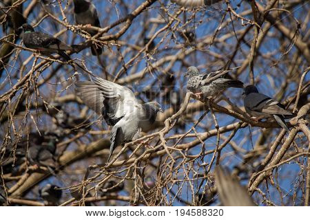 Pigeons Sitting On The Tree Branch