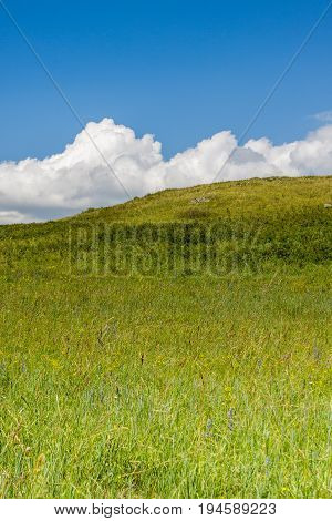 Yellow-green hill and sky with clouds. Wild grasses. Mixed grass. Summer sunny day. Beautiful summer landscape.