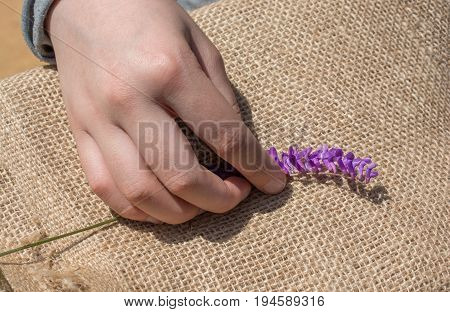 Colorful Wild Spring Flowers In Hand