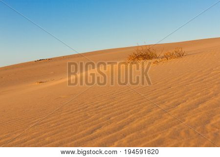 Divided photography on two part by sand and sky. Lands and panorama background. Sustainable ecosystem. Yellow dunes at sunrise