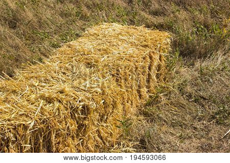 Pressed straw briquettes left of harvest lying on a field at sunset Pressed hay briquettes on the field