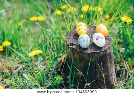 four colorful Easter eggs lying on the stump outdoors spring nature background