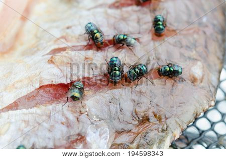 close up group fly eat Dried fish