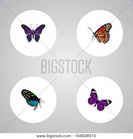 Realistic Hairstreak, Butterfly, Milkweed And Other Vector Elements. Set Of Butterfly Realistic Symbols Also Includes Monarch, Butterfly, Beautiful Objects.