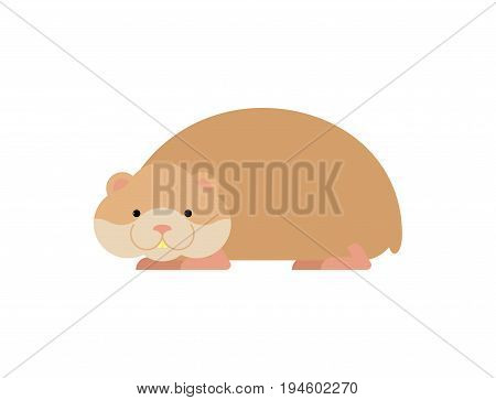 Hamster Isolated. Cute Pet On White Background. Home Rodent