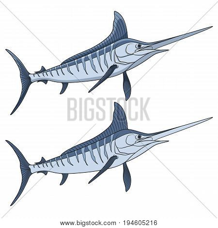 Colored illustration of a marlin fish. Isolated vector objects on white background.
