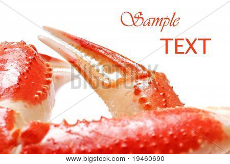 Snow crab legs on white background with copy space.  Macro with shallow dof.  Selective focus on claw.