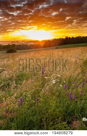 Flower Meadow Field In Countryside Under Scenic Dramatic Sky In Sunrise Dawn Sunset.