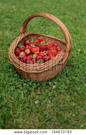Sweet And Soft Strawberries