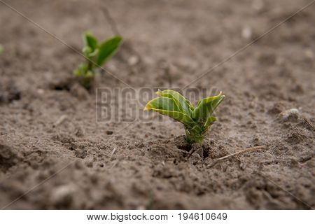 Small Plants Growing From The Ground