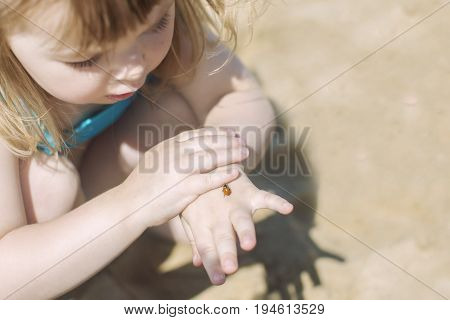 ladybug in kids hands. small child holding ladybird bug on sunny summer day.
