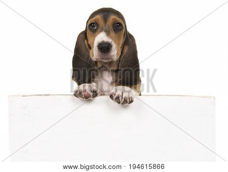 Cute french basset puppy hanging over a white wooden board with space for text on a white background