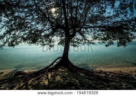 tree of life in beach karimun jawa indonesia