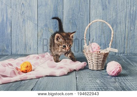 Grey kitten with pink wool ball and straw basket. Playful cat