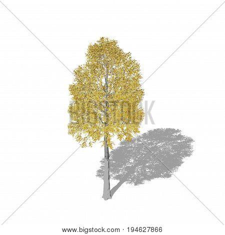 Aspen tree. Isolated on white background. 3D rendering illustration. Cartoon style.