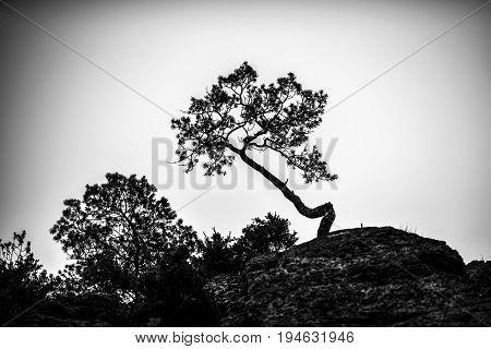 Lonely tree on a rocks black and white nostalgic photo. Poland.