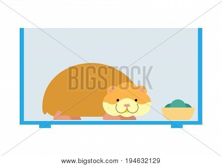 Hamster Inside Cell In Aquarium. Cute Pet On White Background. Home Rodent