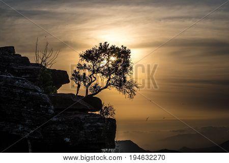 Tundavala mountain sunset tree sillhoutte in Lubango, Angola