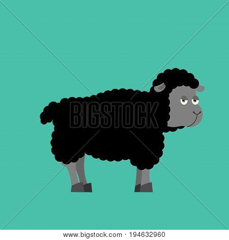 Black Sheep Farm Isolated Animal. Dark Ewe On White Background
