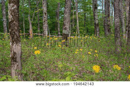 Forest natural landscape. Oak grove. Selective focus.