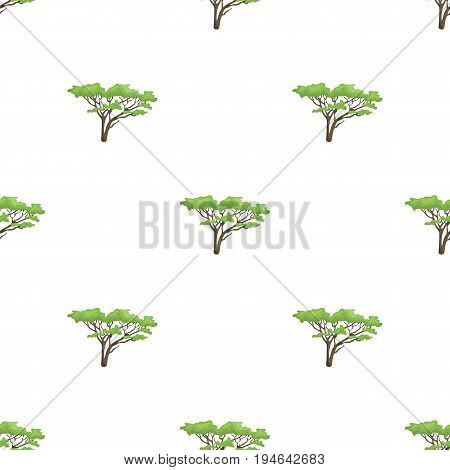 Tree in the savannah.African safari single icon in cartoon style vector symbol stock illustration .