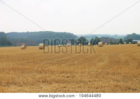 Early in the morning Straw in rolls on a peasant field