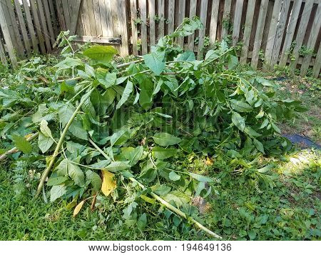 pile of yard debris many green plants and leaves