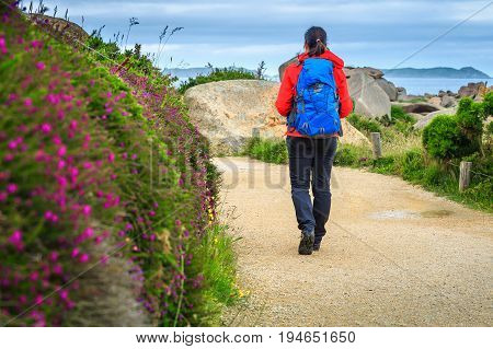 Flowery promenade in the natural park. Active young sportive hiker woman walking on the hiking trail Perros Guirec Brittany region France Europe
