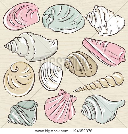 Set of different types of clams and shells on a beige grunge background vector illustration.