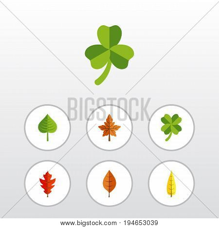 Flat Icon Maple Set Of Alder, Maple, Frond And Other Vector Objects. Also Includes Aspen, Foliage, Alder Elements.