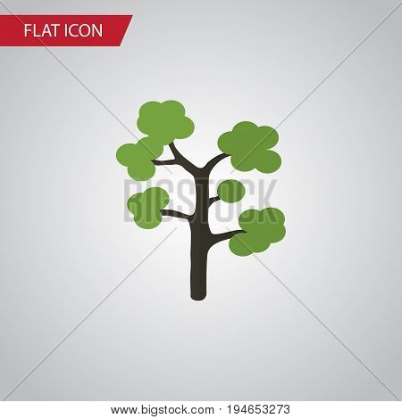 Isolated Evergreen Flat Icon. Garden Vector Element Can Be Used For Evergreen, Tree, Timber Design Concept.
