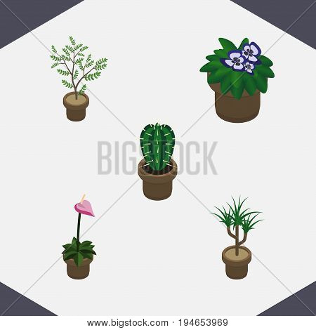 Isometric Plant Set Of Flowerpot, Peyote, Houseplant And Other Vector Objects. Also Includes Plant, Botany, Flower Elements.