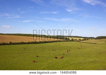 Summer English Landscape