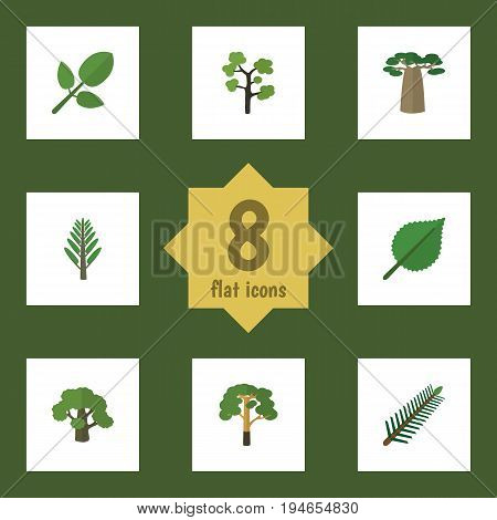 Flat Icon Natural Set Of Wood, Linden, Baobab And Other Vector Objects. Also Includes Evergreen, Tree, Jungle Elements.