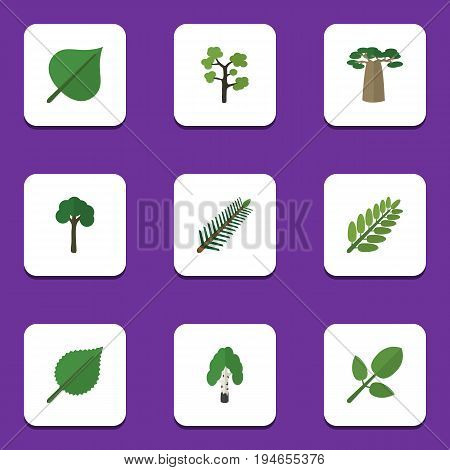 Flat Icon Ecology Set Of Baobab, Evergreen, Hickory And Other Vector Objects. Also Includes Alder, Park, Forest Elements.