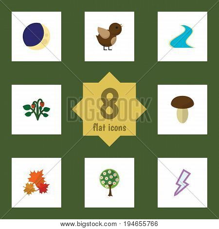 Flat Icon Nature Set Of Champignon, Bird, Tributary And Other Vector Objects. Also Includes Crescent, Leaf, Storm Elements.